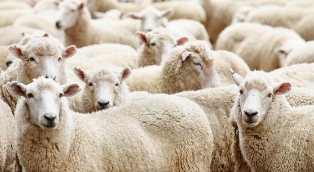 Животноводческим хозяйствам Узбекистана будут выделяться субсидии за произведенную продукцию