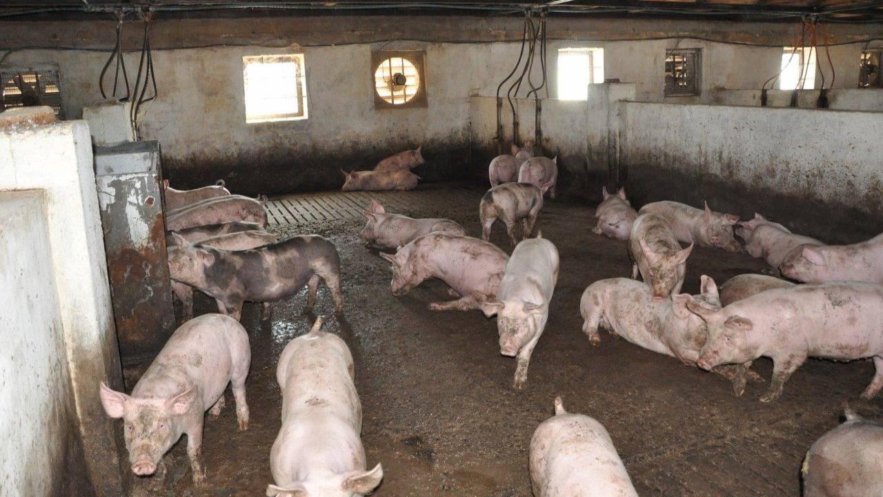 Информация о продаже собачьего мяса в Келесе оказалась ложью