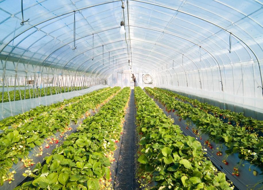 Правительство Узбекистана выделило 24 триллиона сумов Фонду сельского хозяйства