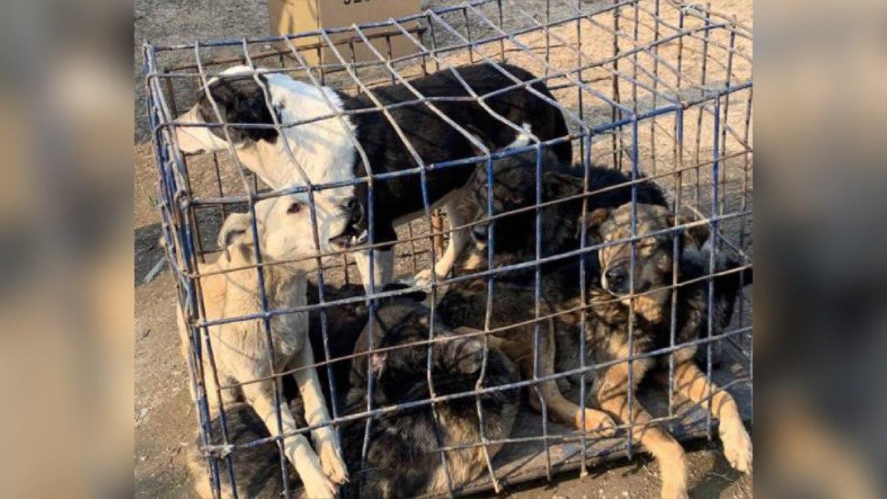 Сотрудников МЧС обвинили в попытке отстрелять 200 собак в Ташобласти