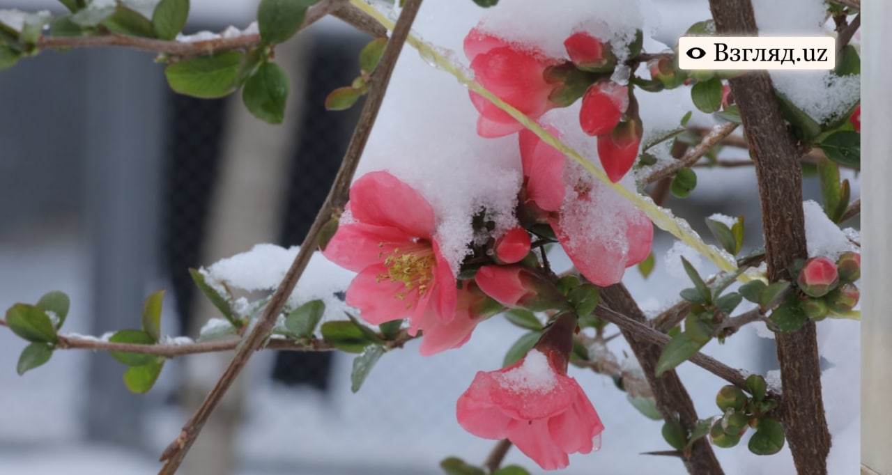 В Узбекистане сохранится морозная погода