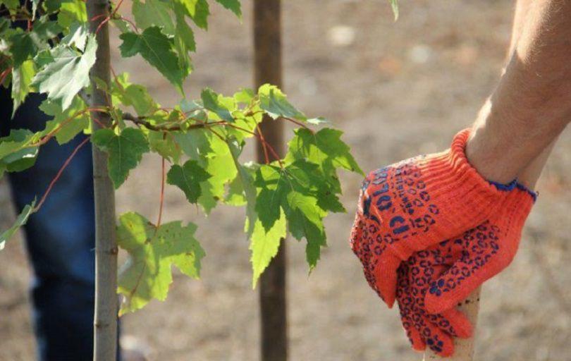 За четыре года в Узбекистане посадят 6,5 миллионов саженцев