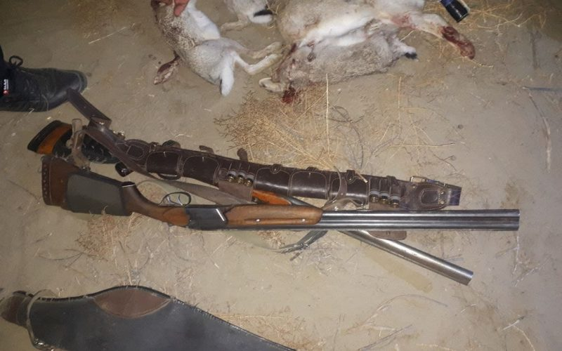 В Бухаре пойманы браконьеры, незаконно охотившиеся на диких кроликов
