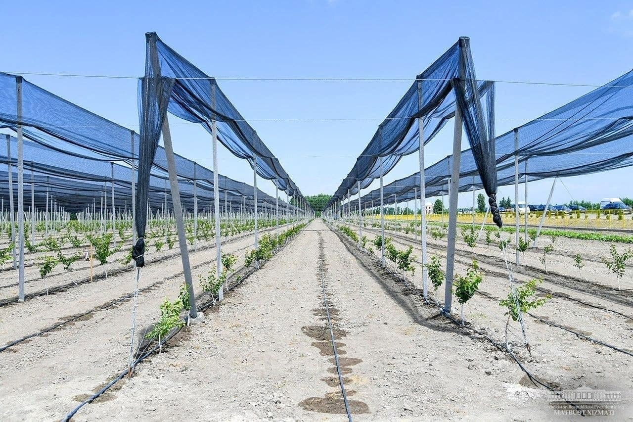 Замначальника сельхоз отдела пообещал оформить земли за две тысячи долларов в Наманганской области
