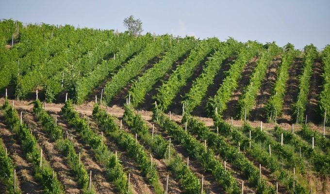 Статистическую базу данных по сельскому хозяйству Узбекистана расширят