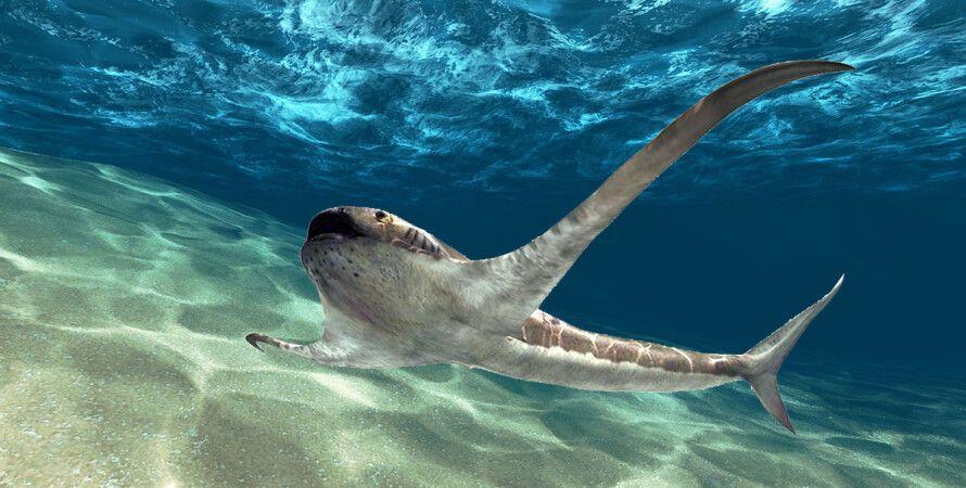 Ученые обнаружили окаменелый скелет «крылатой» акулы на северо-востоке Мексики