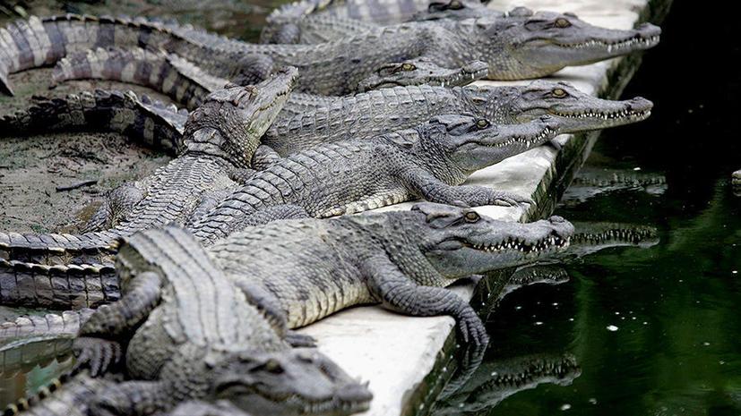 В Южной Африке крокодилы сбежали с фермы