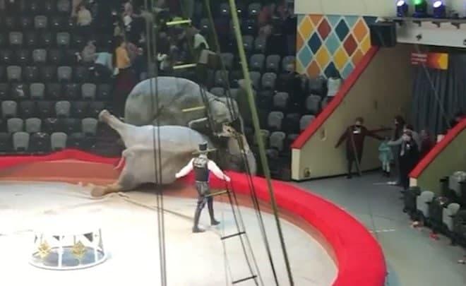 Слоны подрались в казанском цирке — видео