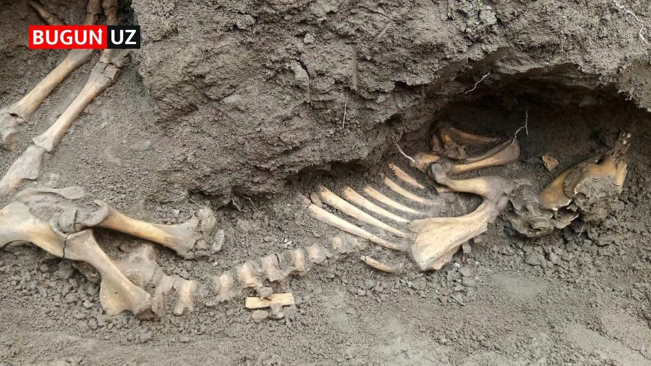 В Наманганской области нашли скелет неизвестного существа — фото