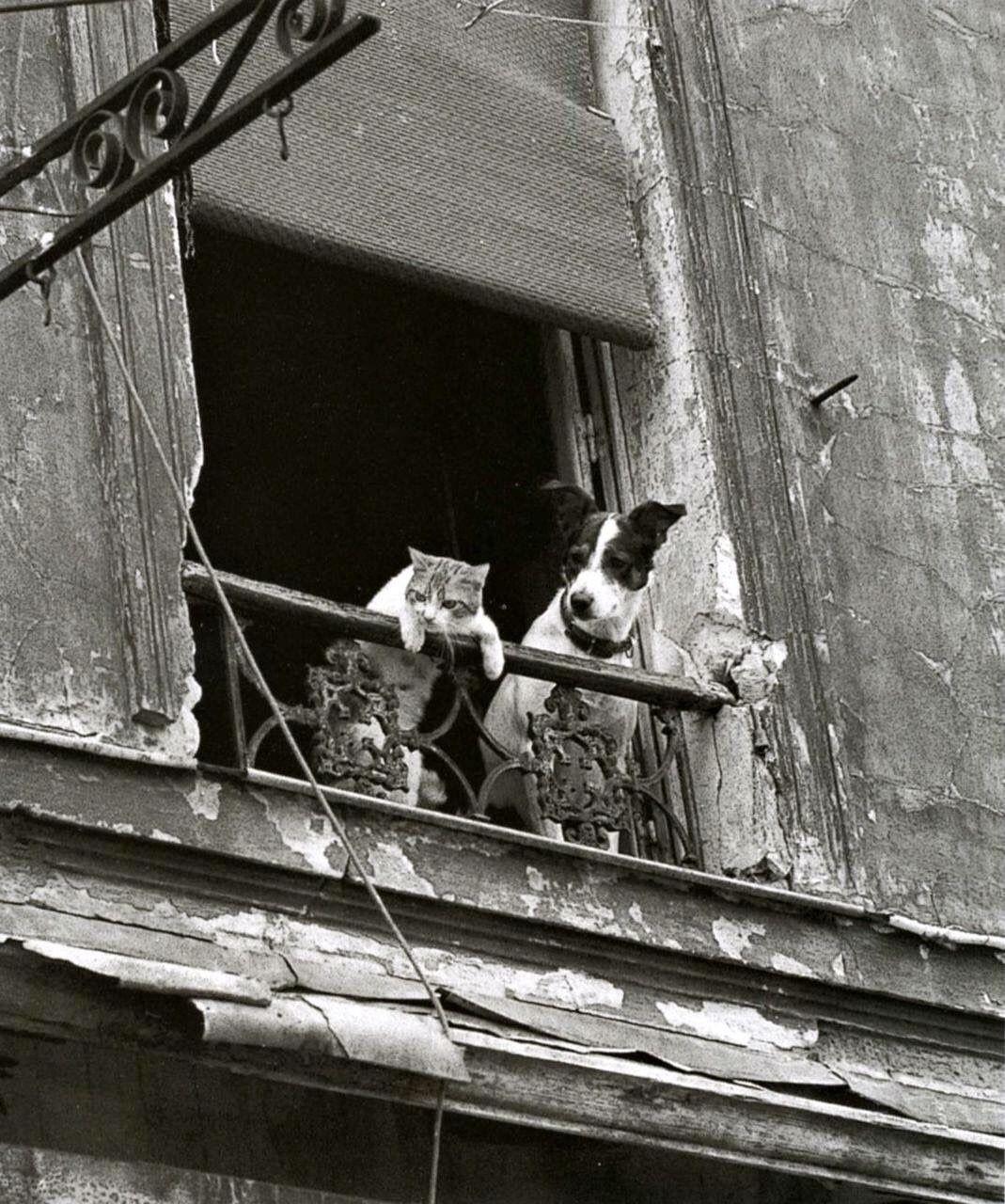 Святой кот, шагающий голубь и марширующая сорока: веселые фотографии животного мира – фото