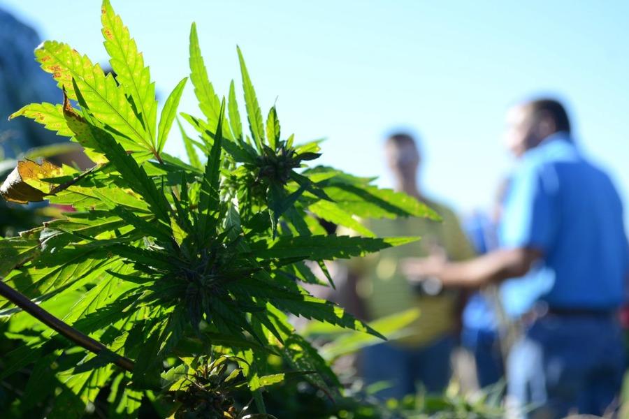 Вступил в силу закон о легализации марихуаны в Мексике