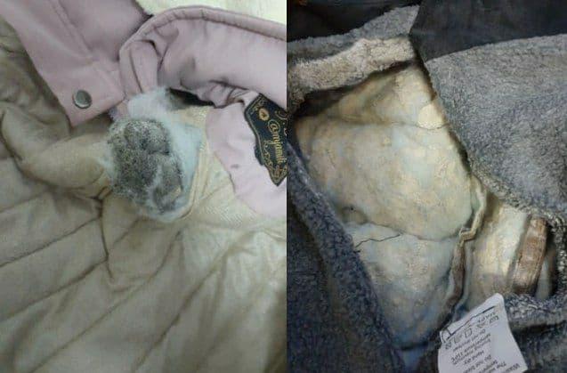 На пограничном пункте Сурхандарьинской области двое мужчин пытались перевести героин в куртке и ковре