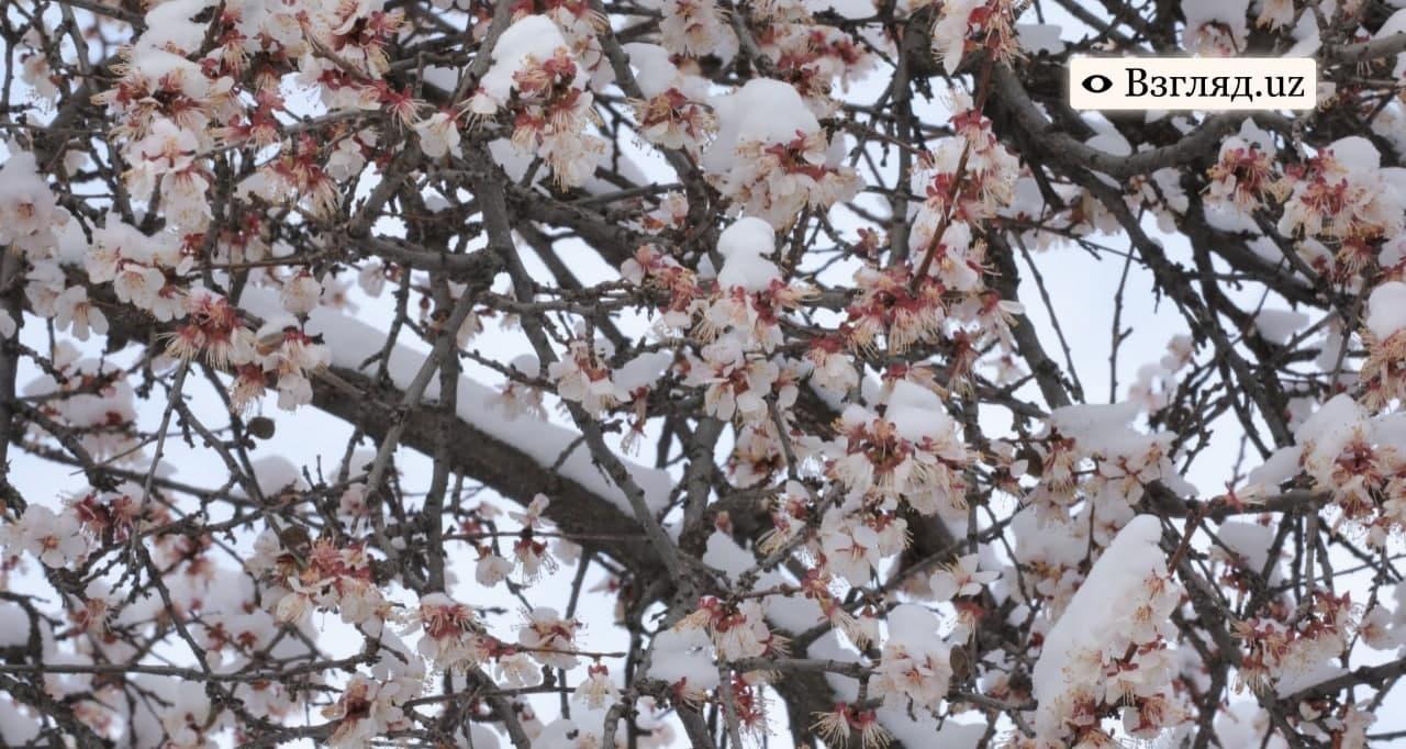Снежная погода ожидается в Узбекистане