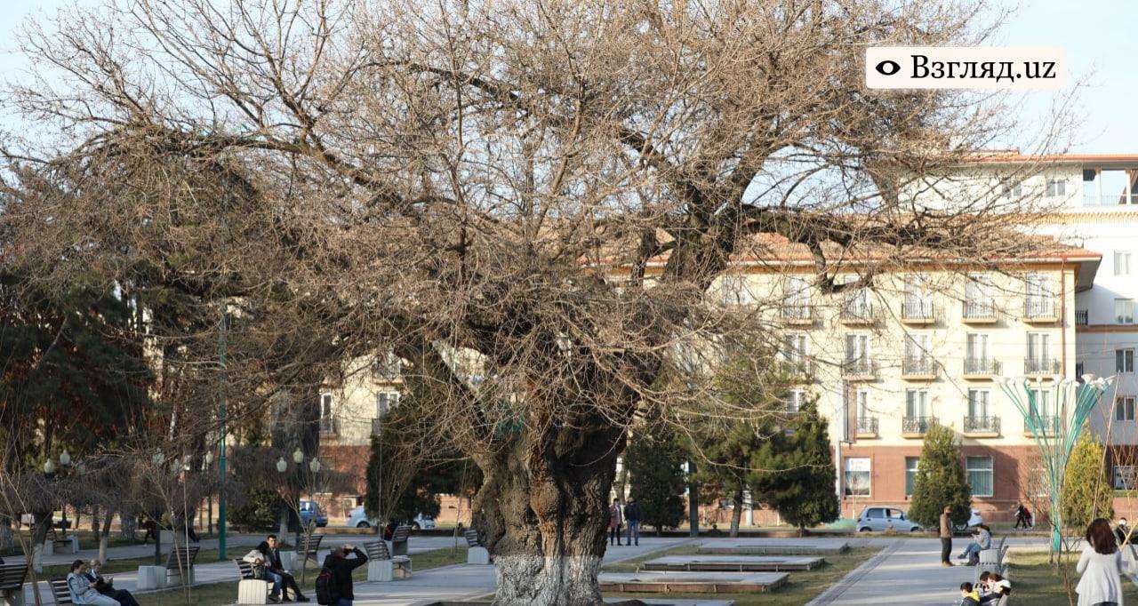В Узбекистане ожидается теплая погода