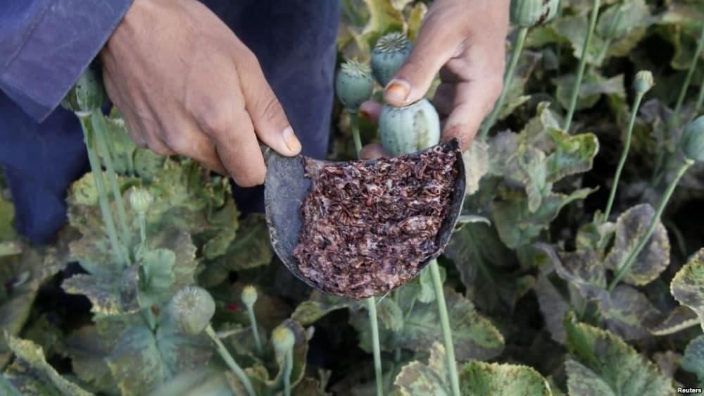 В Самарканде мужчина пытался продать 500 грамм опия