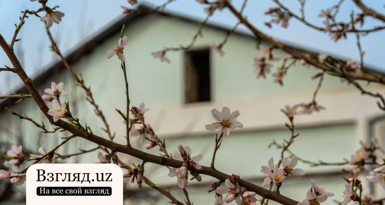 В Узбекистане в ближайшие дни ожидается потепление