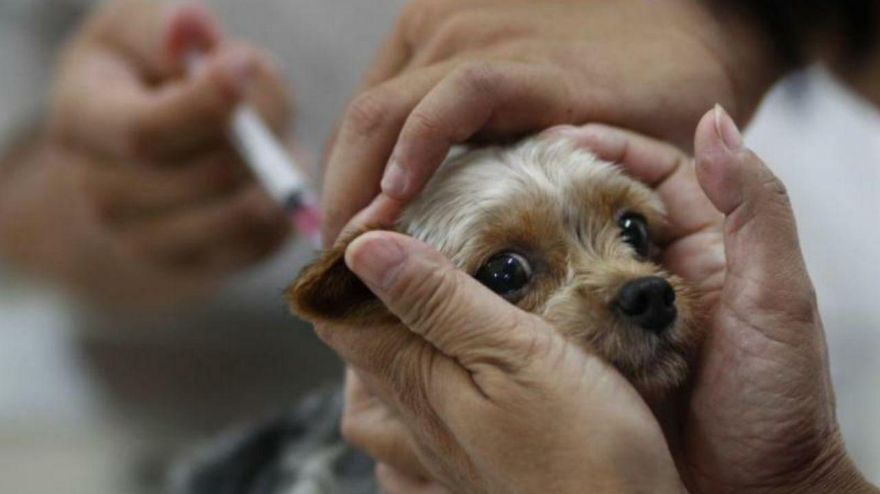 Россельхознадзор в апреле представит вакцину от COVID-19 для животных