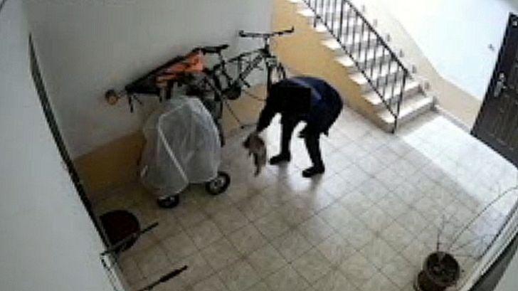 В Ташкенте мужчина выкинул кошку в пакете – видео