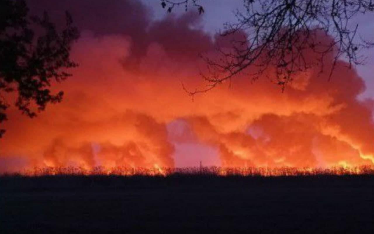 В Сырдарьинской области произошел пожар в лесоохотнечем хозяйстве