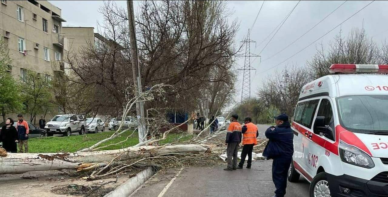 В Ташкенте дерево насмерть придавило мужчину