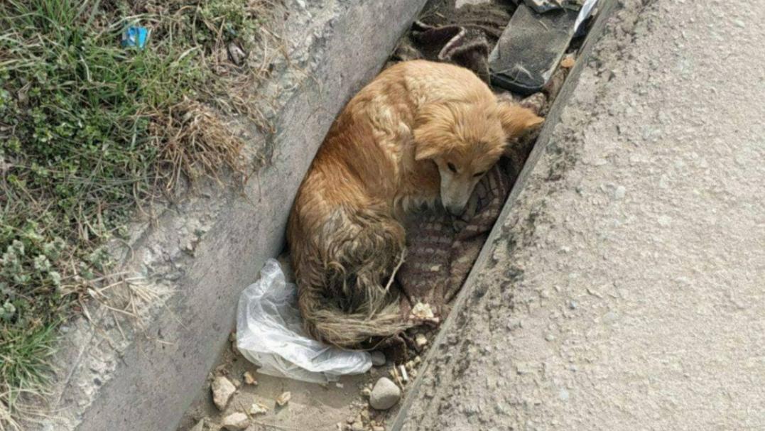 В Ташкенте была найдена собака с пулей в теле
