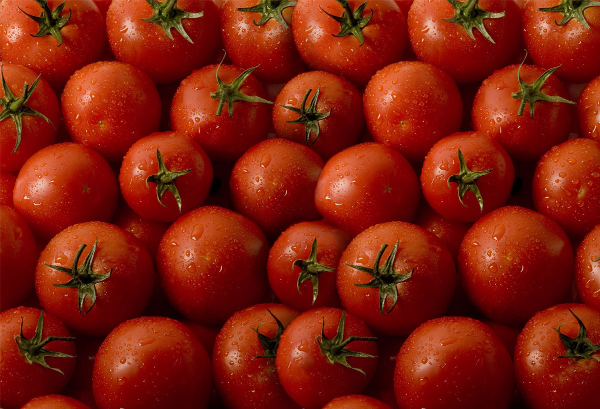 Выяснилось, какой регион экспортировал больше всего помидоров