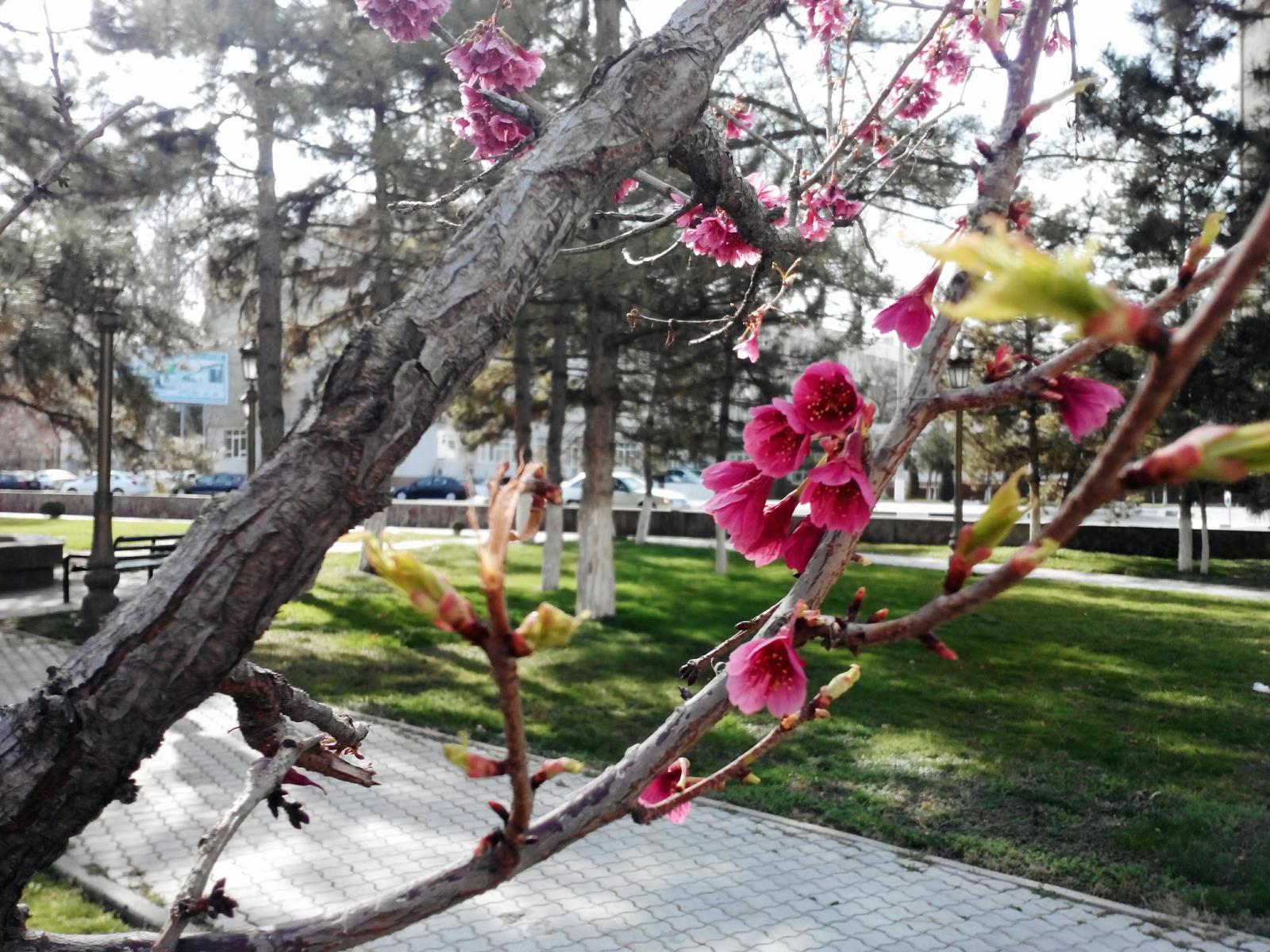 В Узбекистане на 7 и 8 марта ожидается теплая погода