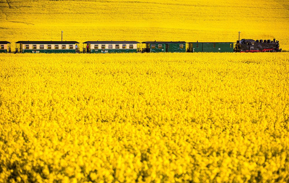 Лук, ромашки и тюльпаны: самые красивые поля по всему миру – фото