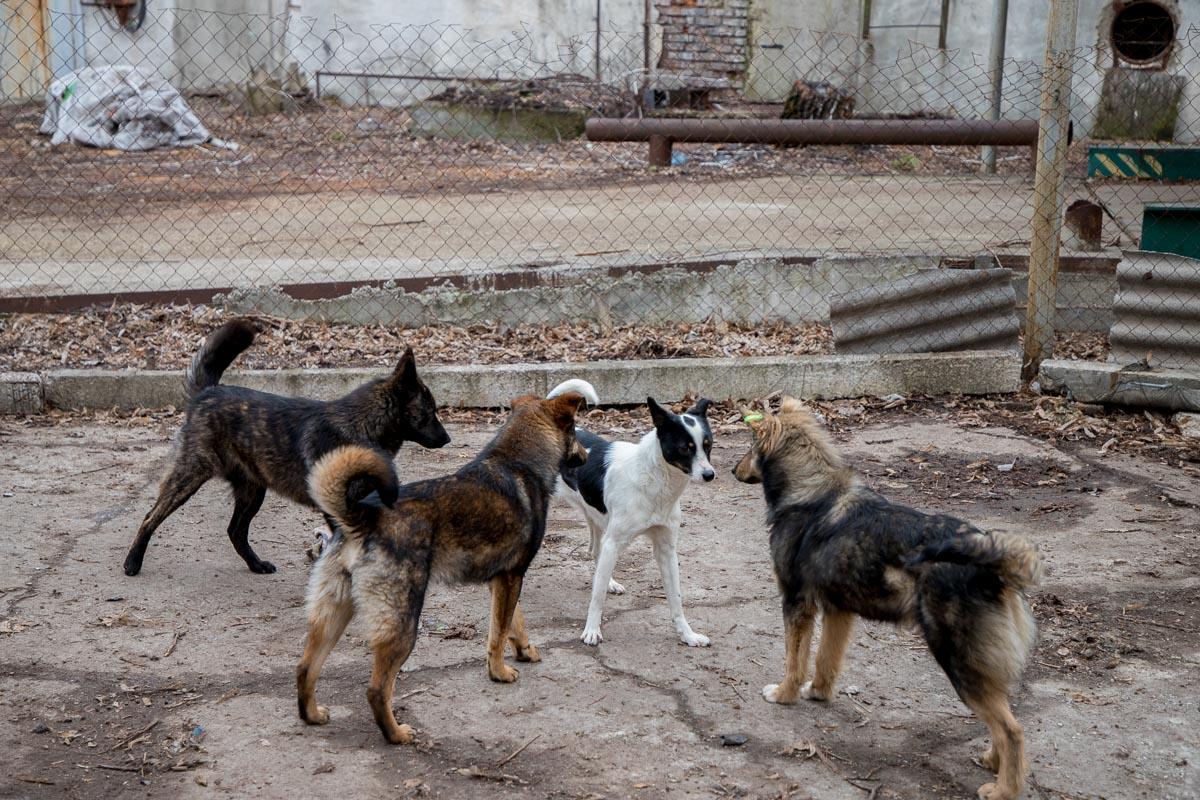 В Яшнабадском районе столицы трое мужчин избивали собак железной арматурой