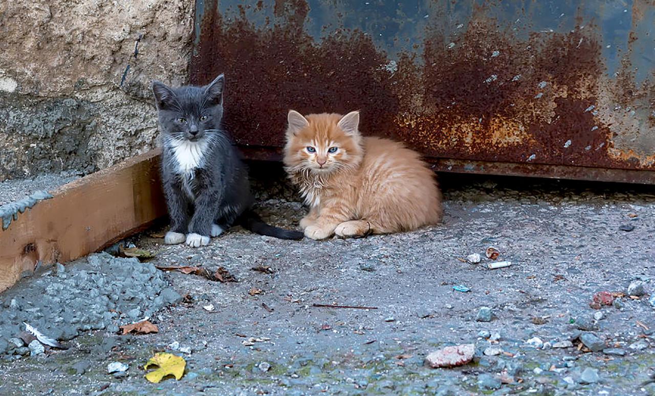 В Узбекистане областных ветеринаров будут обучать стерилизации и кастрации животных