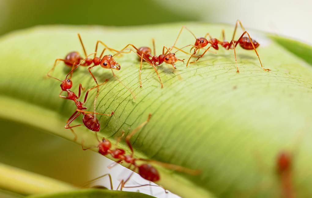Мировая экономика потеряла почти 1,3 триллиона долларов из-за животных и растений паразитов