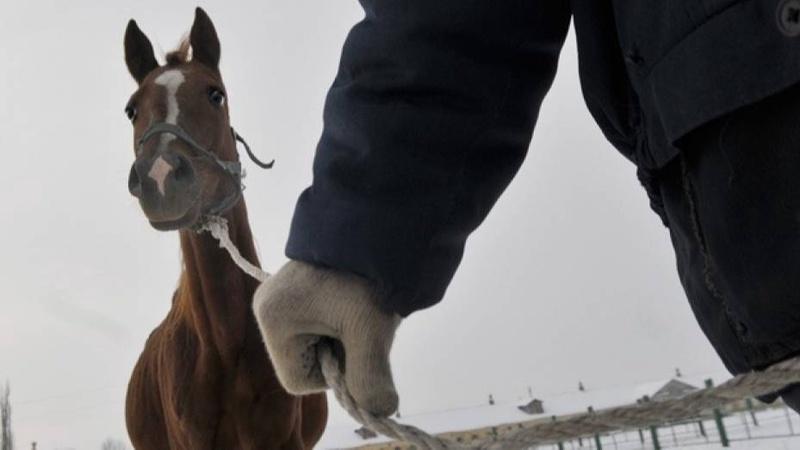 В Джизакской области двое мужчин похитили лошадей общей стоимостью 65 миллионов сумов