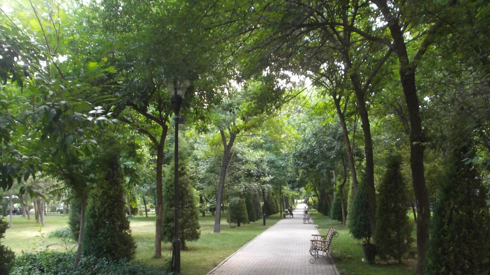 Вырубку деревьев в Узбекистане будут компенсировать