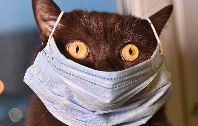 В ВОЗ заявили о возможности передачи коронавируса от человека к животным