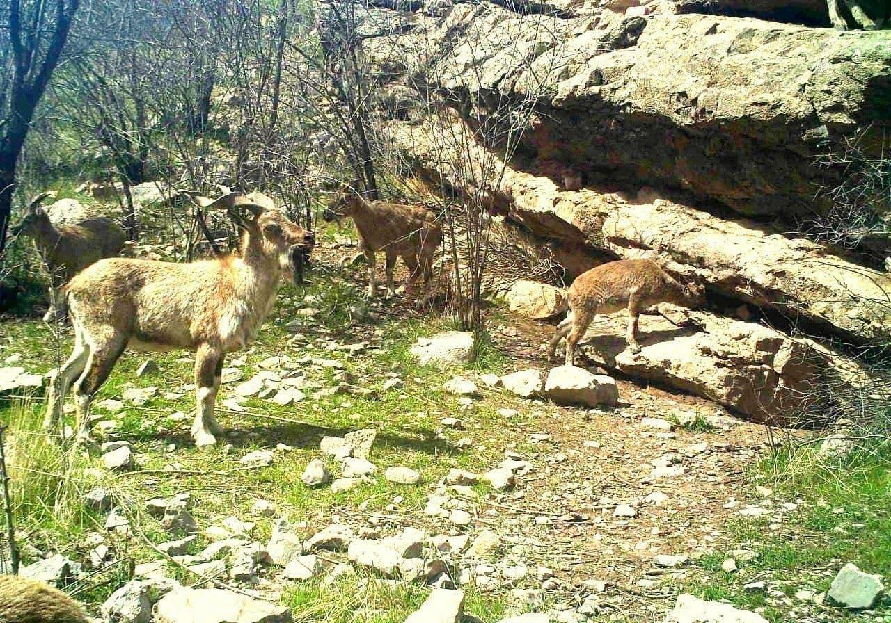 В «фотоловушку» в Сурханском заповеднике попали дикие животные – фото