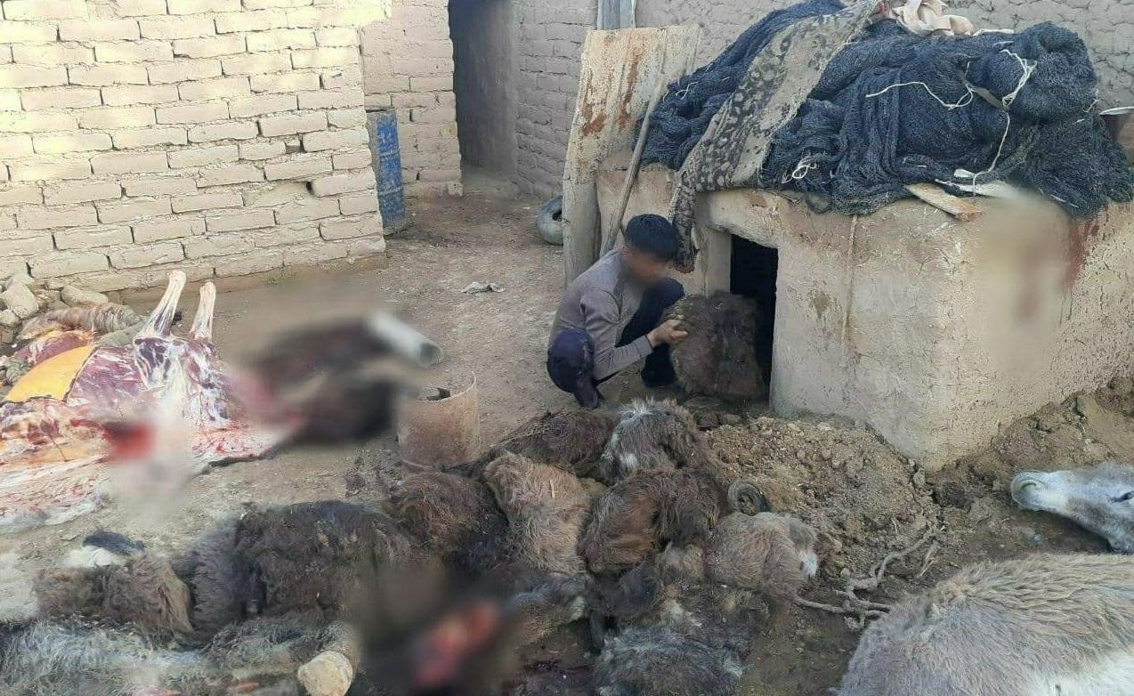 В Кашкадарьинской области мужчины убивали ослов для продажи их мяса — фото