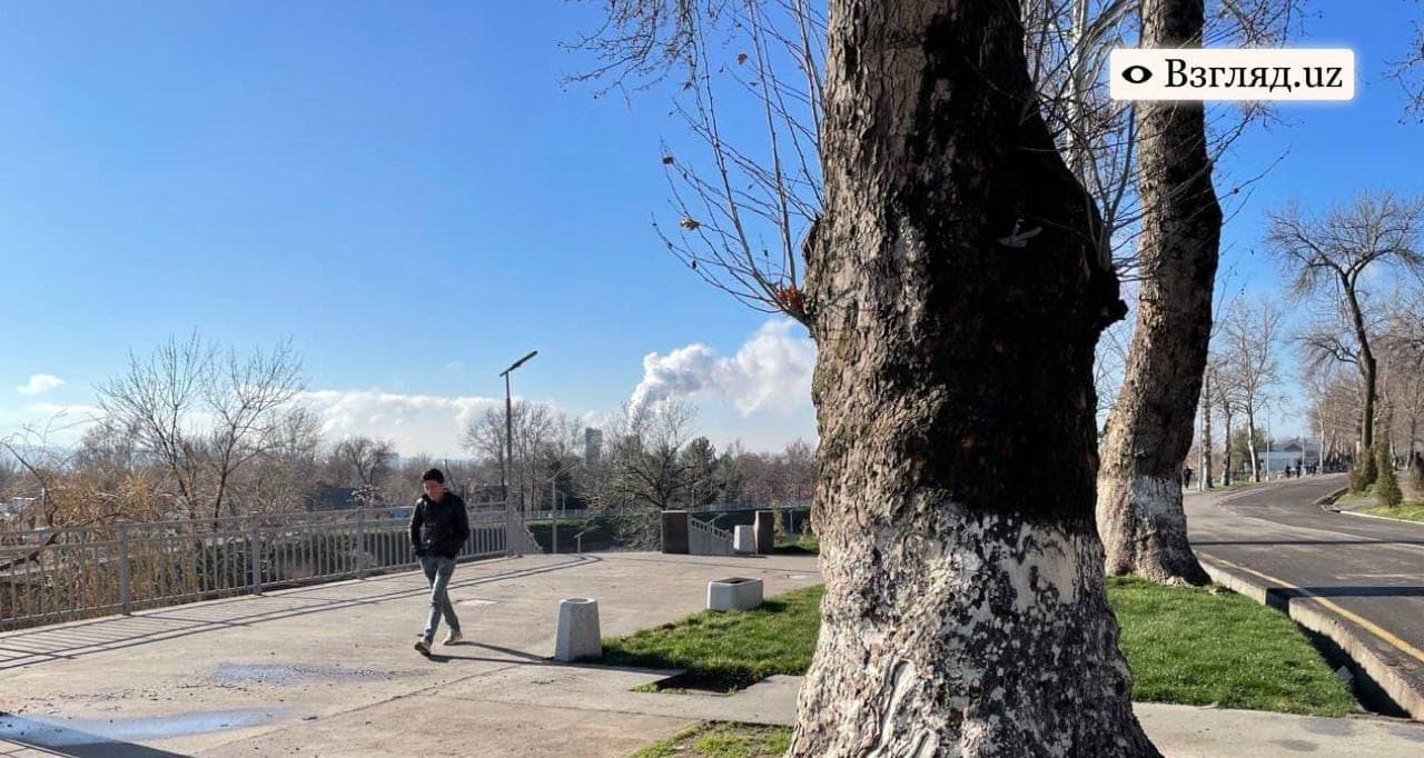 Теплая погода продержится в Узбекистане