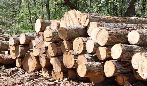 Узбекистан импортировал древесину и изделия из дерева более чем на 85 миллионов долларов