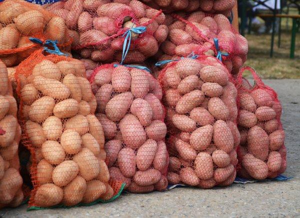 В Андижанской области предприниматели расхитили запасы картофеля
