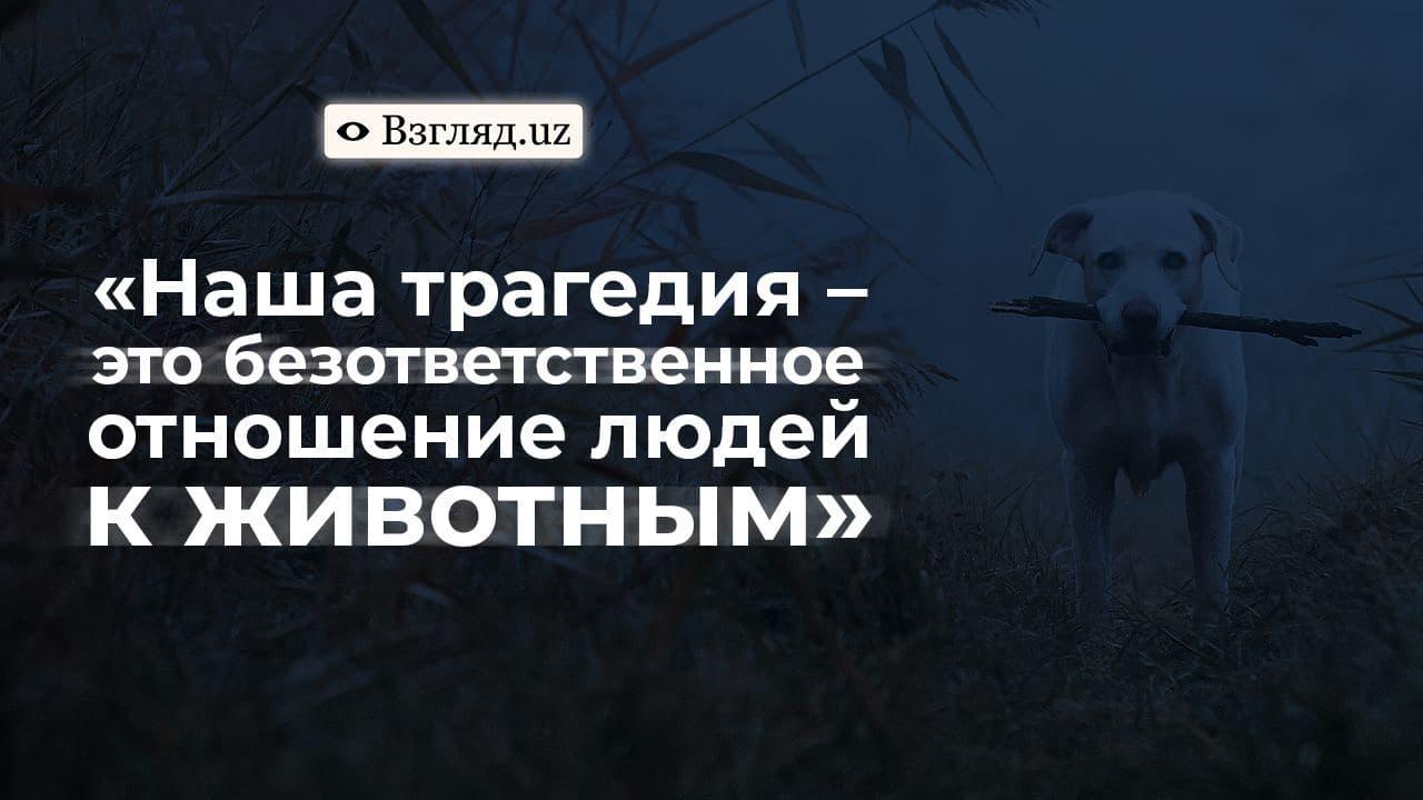 Ветеринары Узбекистана: сколько они зарабатывают и за что борются