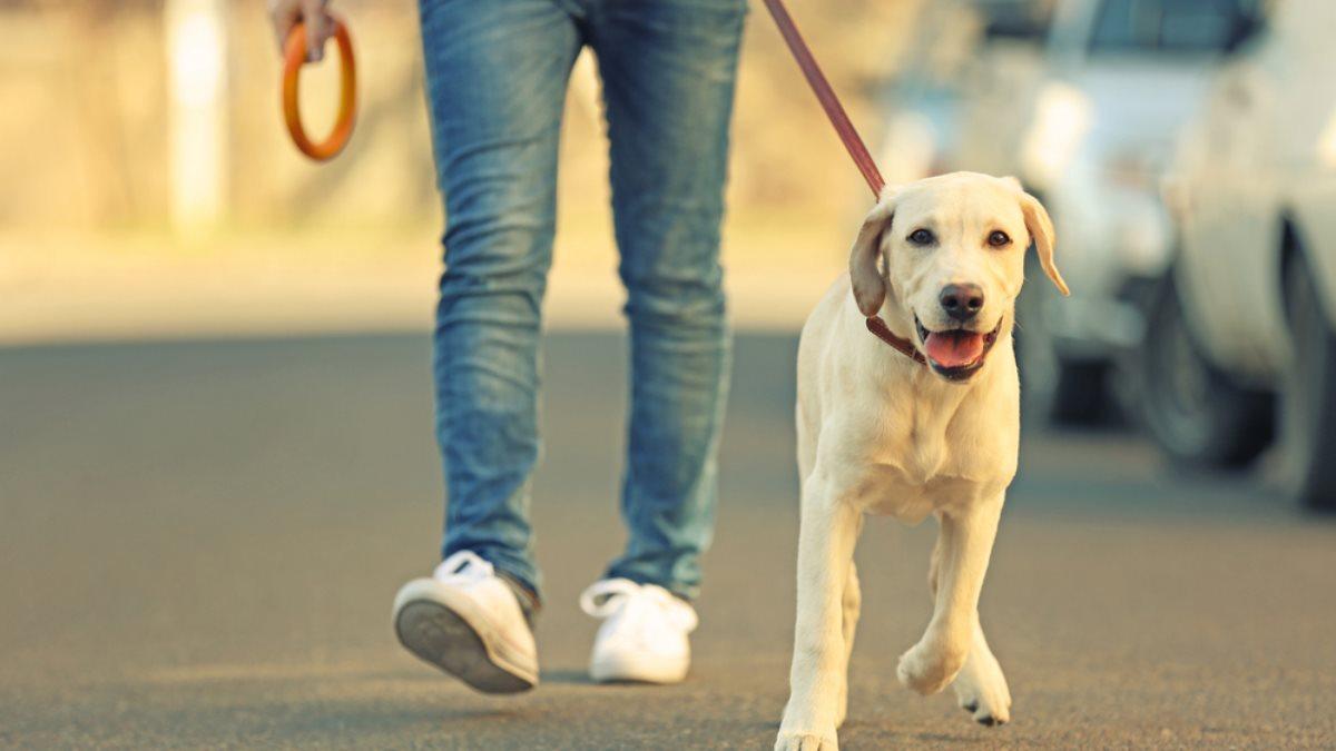 Правила выгула собак: в каких случаях служба отлова может забрать вашу собаку и где питомца нельзя содержать